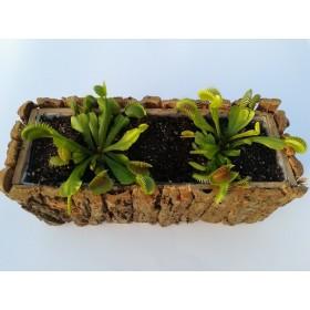 Jardinera de Dionaea