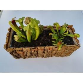 Jardinera de Dionaea y Sarracenia