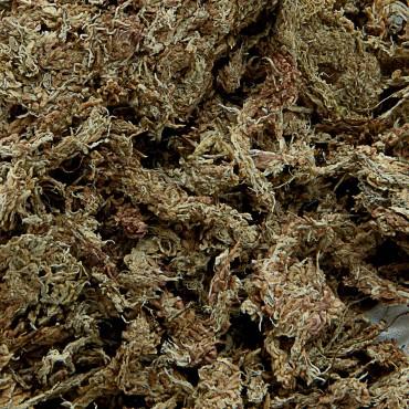 Sphagnum deshidratado Fibras largas