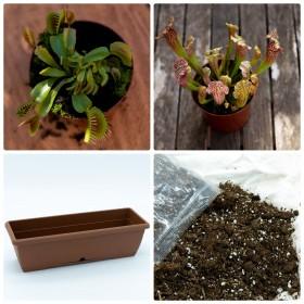 Sarracenia and Dionaea Garden