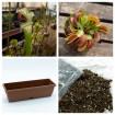 Jardinera con Dionaea y Sarracenia
