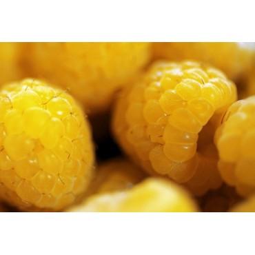 Frambuesa amarilla